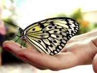 farfalla-ebook-in-internet
